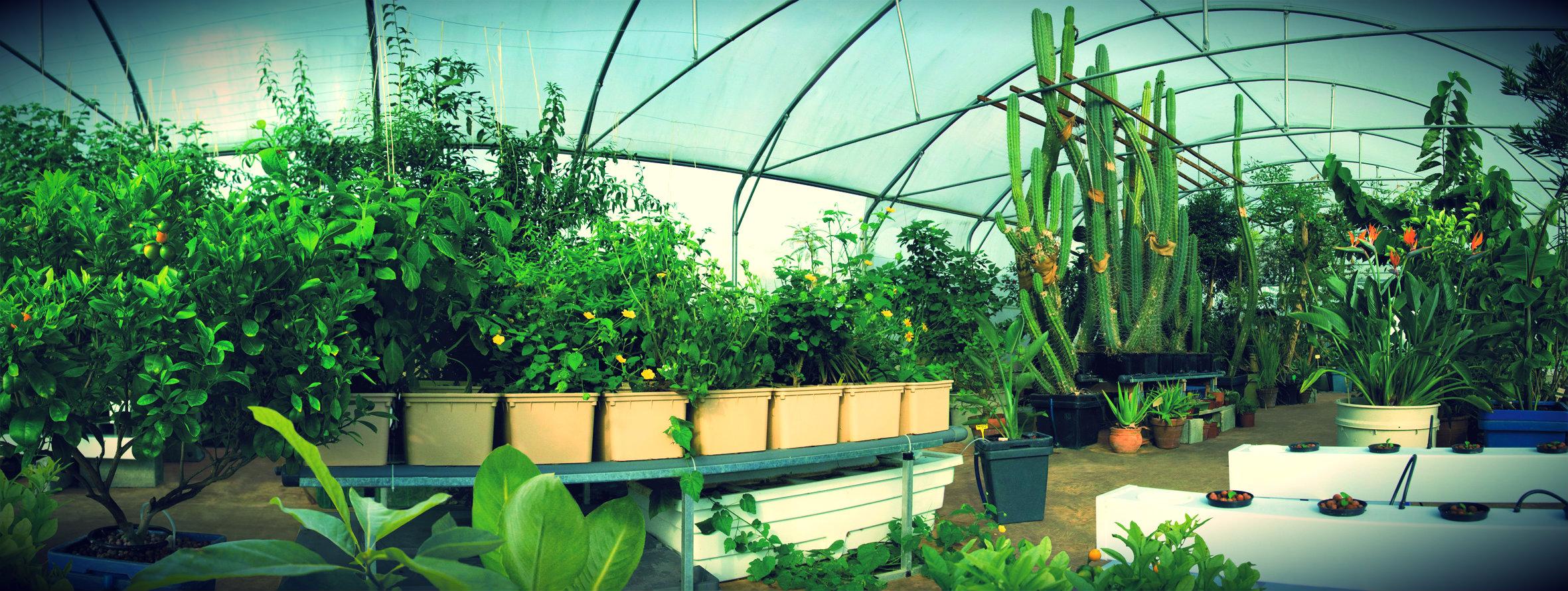 Огурцы - выращивание, посадка, уход. В открытом грунте и 90