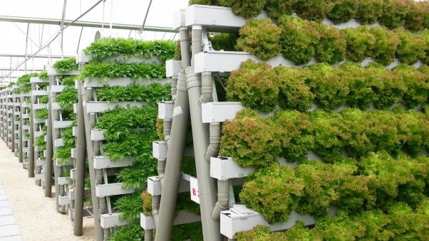 Оборудование гидропоника для выращивания зелени 53