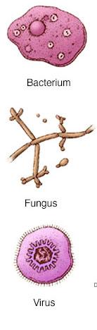 грибки и бактерии