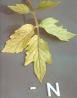 Нехватка фосфора в растении вызывает
