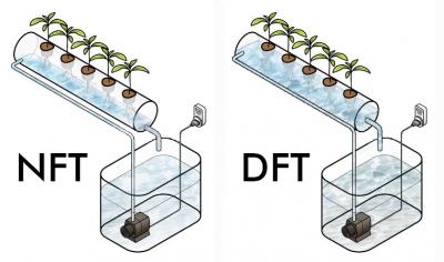 NFT и DFT