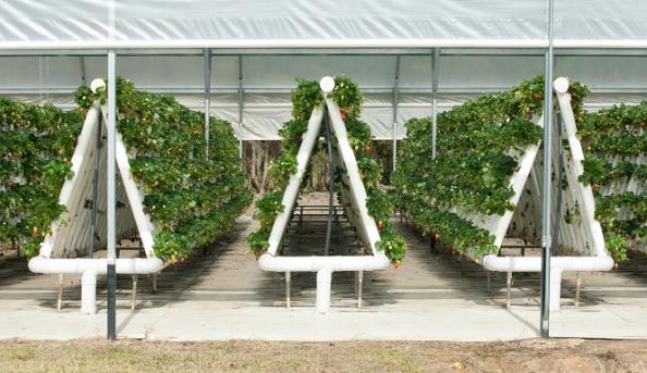 Вертикальное выращивание